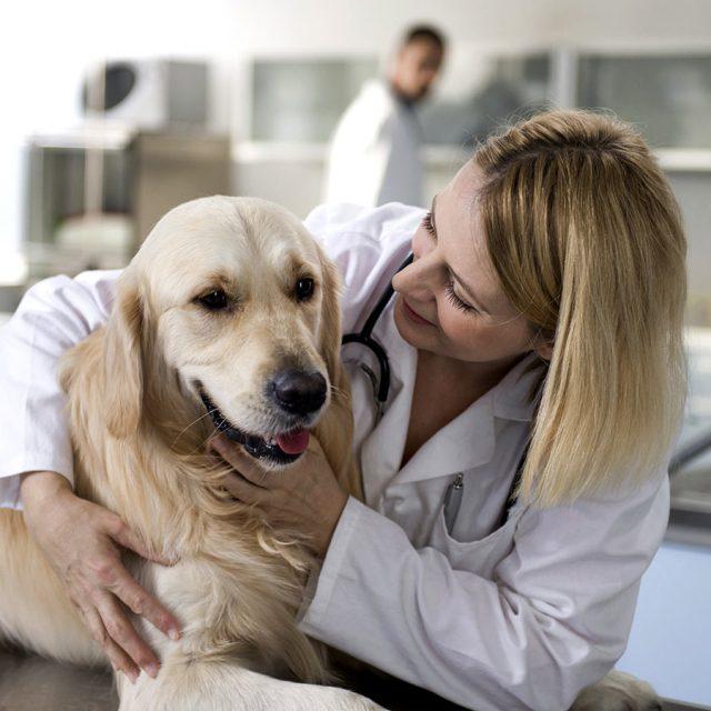 الإسهال الدموي في الكلاب