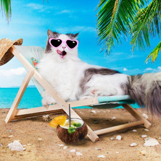 تربية القطط في الصيف والعناية بها