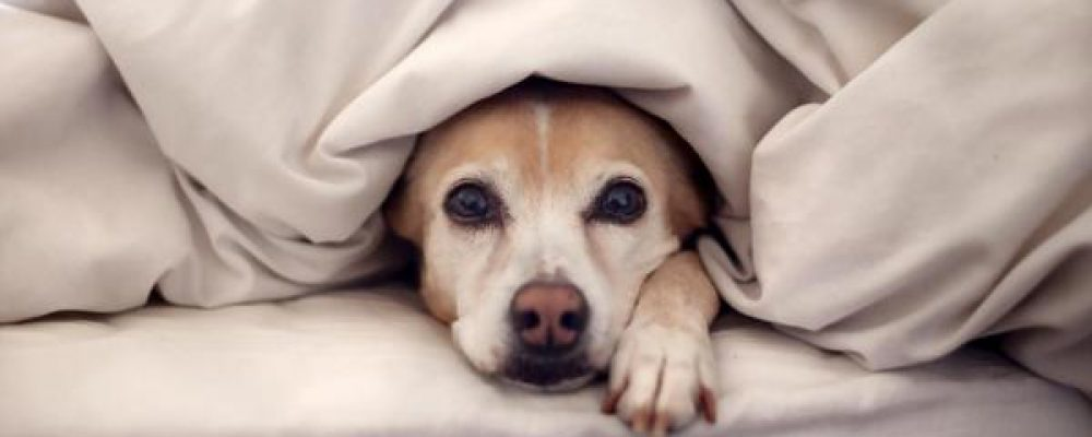 تأخر الحيض عند الكلاب و ميعاد حيض الكلاب بعد الولادة