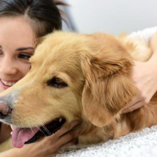 كيف تجعل كلبك يحبك في سبع خطوات