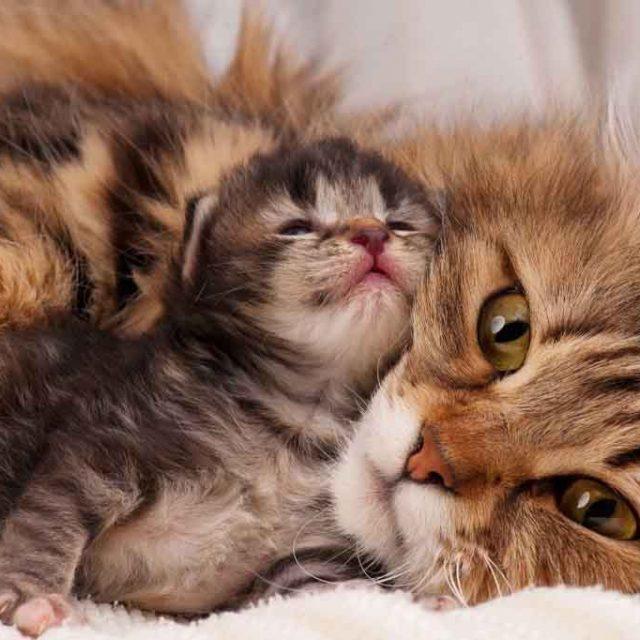 هل تحزن القطط لفراق اطفالها ؟