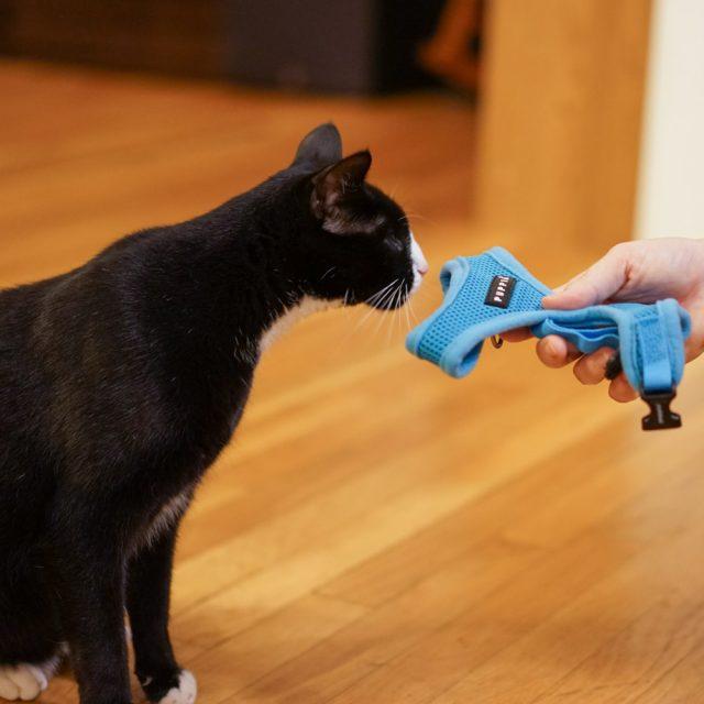 طريقة تدريب القطط على الجلوس في 7 أيام فقط