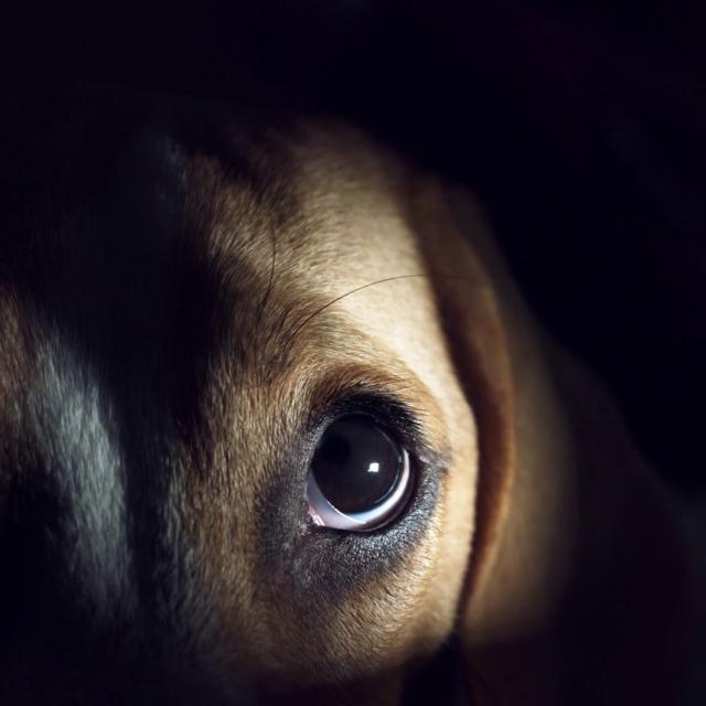 هل تستطيع الكلاب الرؤية في الظلام ؟ اعرف الاجابة