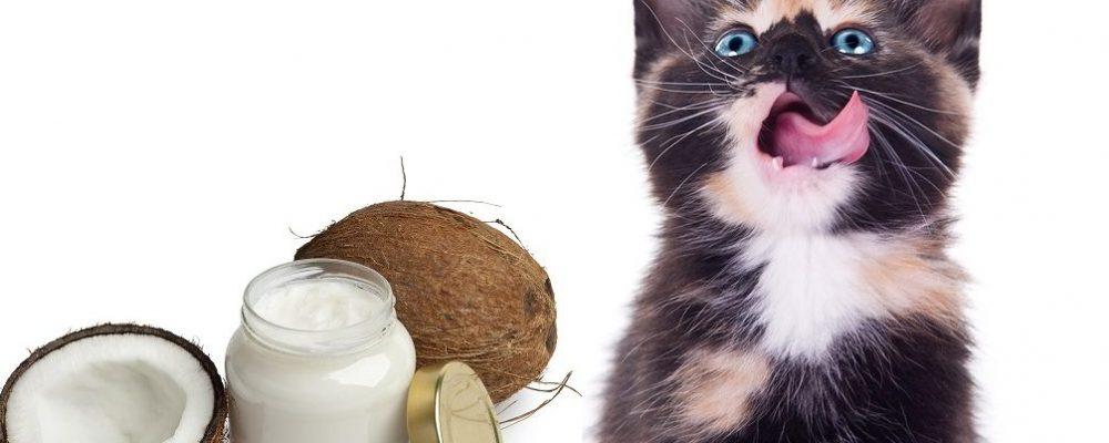 زيت جوز الهند للقطط – 5 فوائد مذهلة