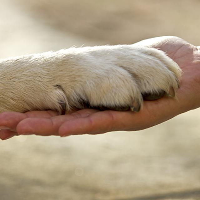 ما هي اكثر الكلاب وفاء : 7 سلالات كلاب وفية لاصحابها