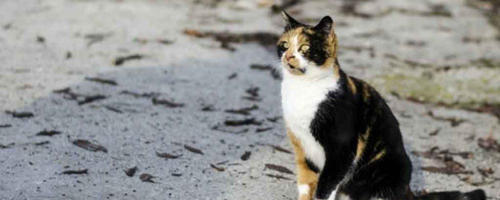 هل يعود القط الى المنزل ؟ كيف تعثر على القطط المفقودة