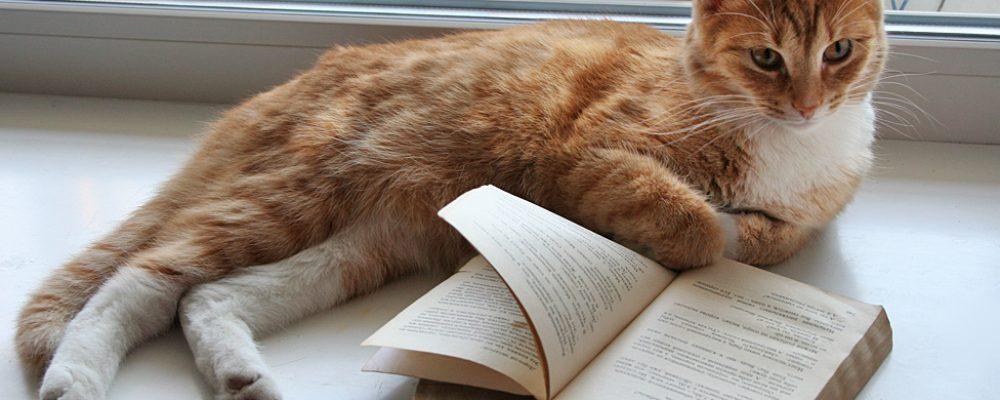 5 أمراض نادرة قد تصيب قطتك .. اعرف أعراضها