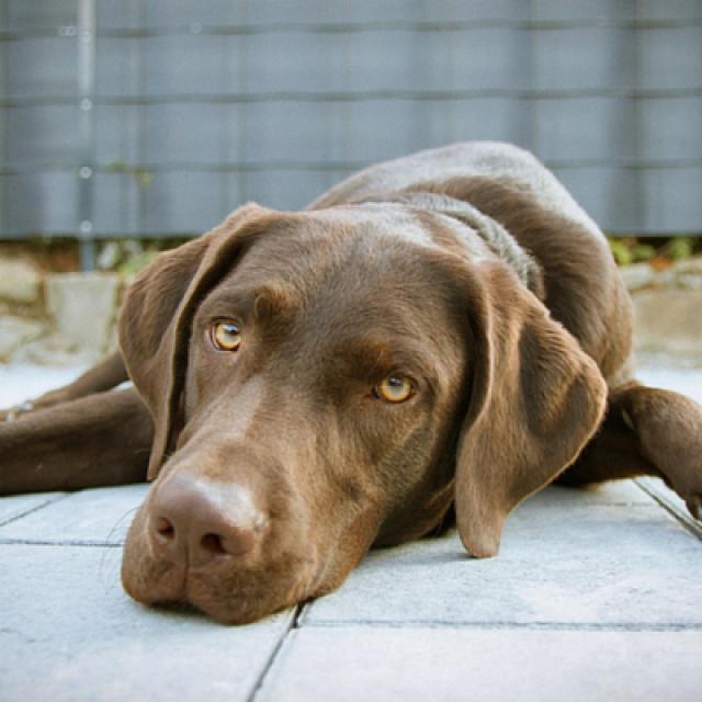 الأمراض الجلدية عند الكلاب وعلاجها : 4 مشاكل شائعة
