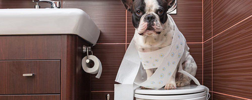 طرق تدريب الكلاب الصغيرة على التبول و دخول الحمام