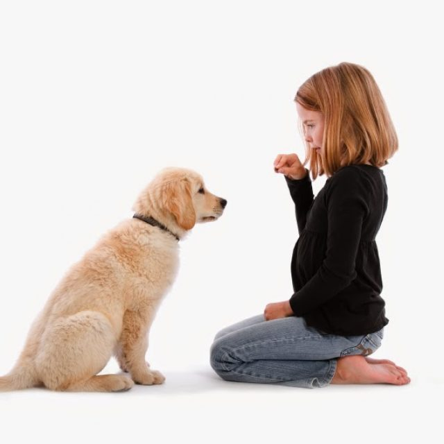 اضرار تربية الكلاب على صحة البنات