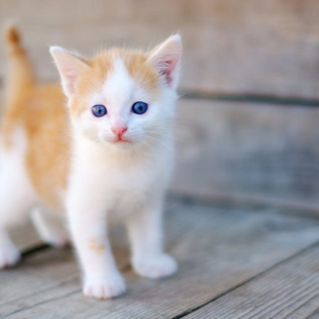 كيف تعرف عمر القطط