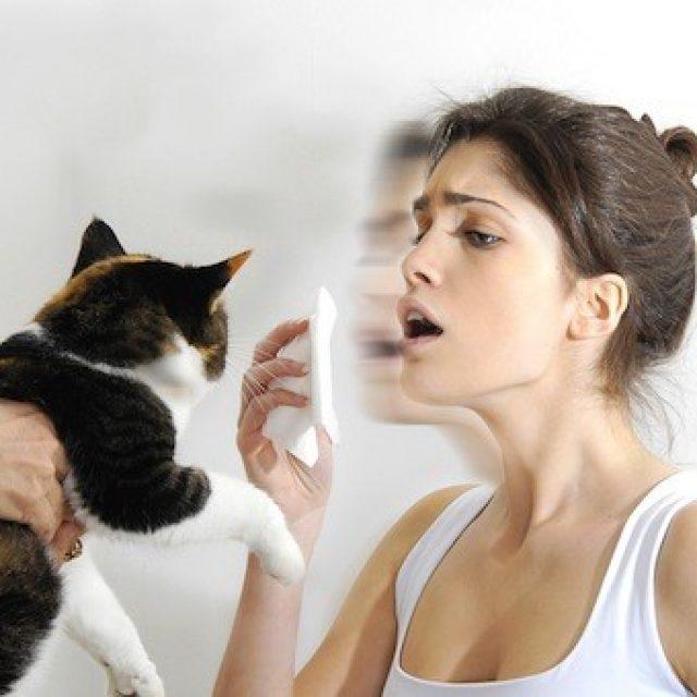 كيفية علاج حساسية القطط