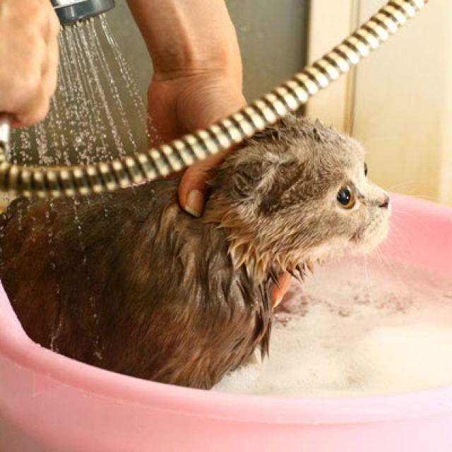 طريقة استحمام القطط بالتفصيل في كافة مراحل عمرها
