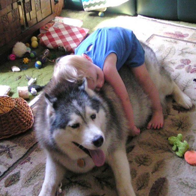 أضرار تربية الكلاب في المنزل مع الأطفال الصغار