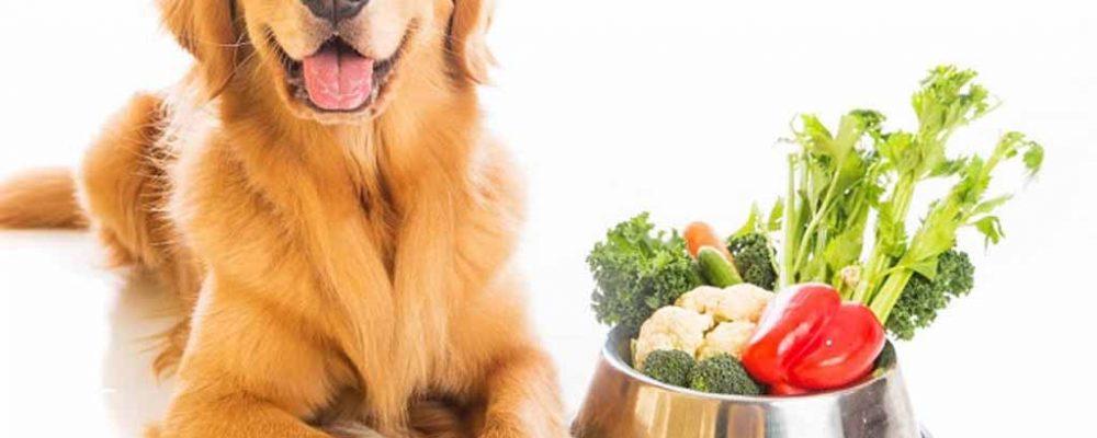 طرق تغذية الكلب المصاب بمرض السكر