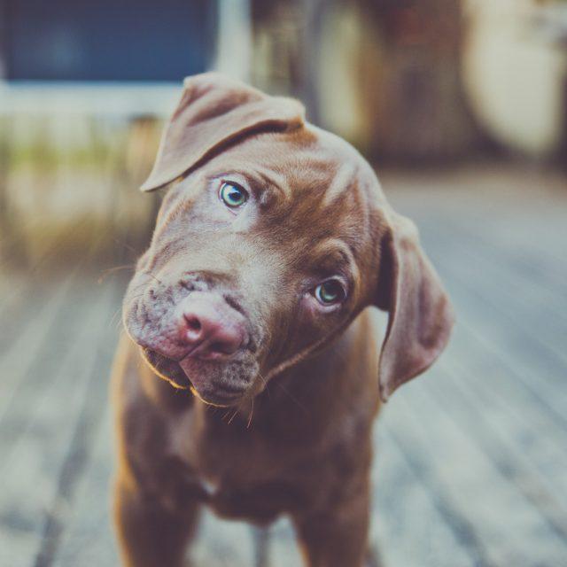 لماذا تميل الكلاب رؤسها ؟ تفسير تصرفات الكلاب