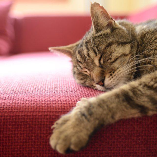 حقائق طريفة تتعلق بعادات نوم القطط