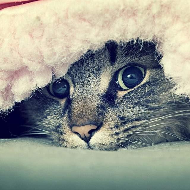 هل قطتك مستعدة لفصل الشتاء ؟