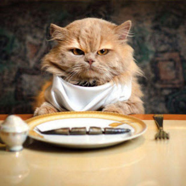خمسة وصفات تساعدك في تحضير طعام القطط