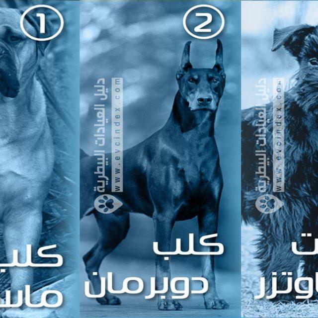 افضل 7 : انواع كلاب الحراسة بالصور والفيديو .. شراسة قاتلة
