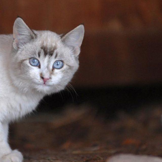 5 نصائح في مساعدة قطط الشارع في فصل الصيف