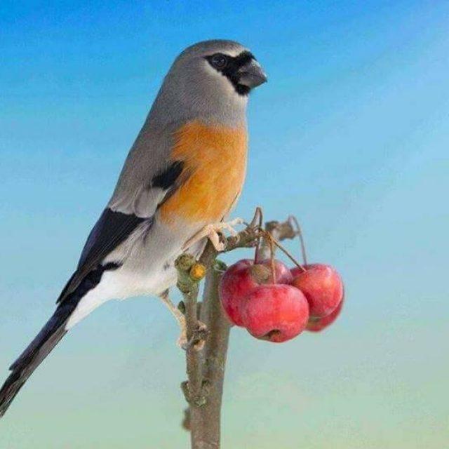 أشهر أمراض طائر الحسون وعلاجها