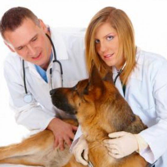 علامات الحمل في الكلاب بالصور و مدة حمل الكلاب بالتفصيل
