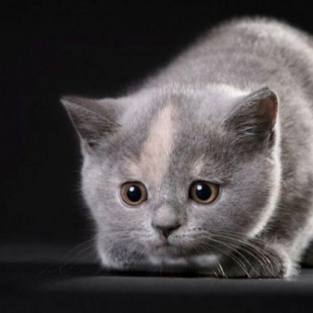 أنفلونزا القطط : أعراض البرد عند القطط وعلاجها