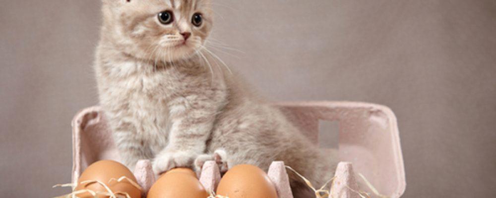 7 أطعمة لا يجب أن تقدمها لقطك أبدًا