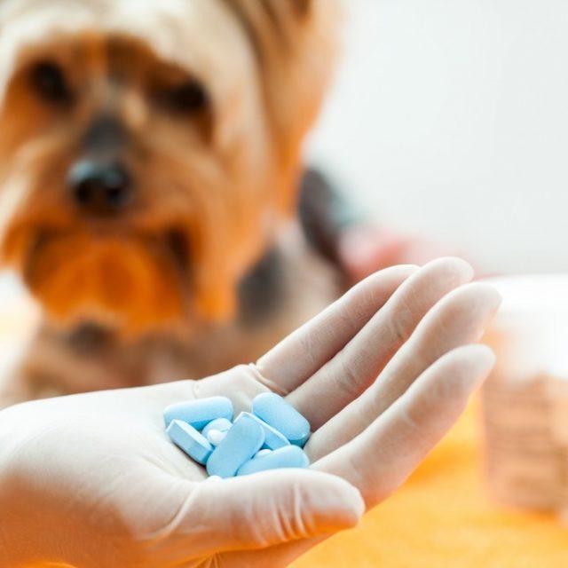 8 أدوية بشرية ملائمة للإستخدام البيطري