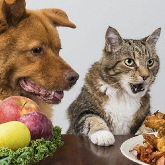 ماذا تأكل القطط والكلاب من طعام البيت