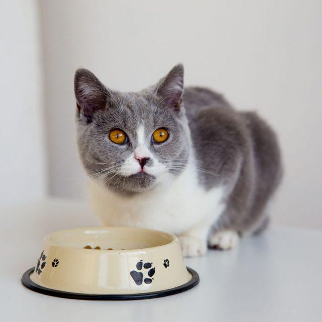 كيف تجعل قطتك تأكل ؟