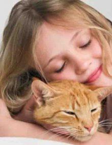 هل تحب القطط أن يعانقها أحد ؟