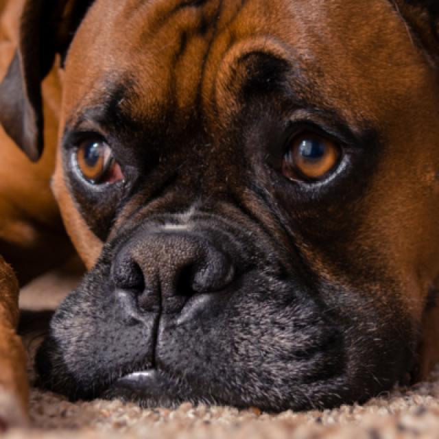 كلبي جبان ما الحل ؟ أسباب الخوف عند الكلاب وعلاجه