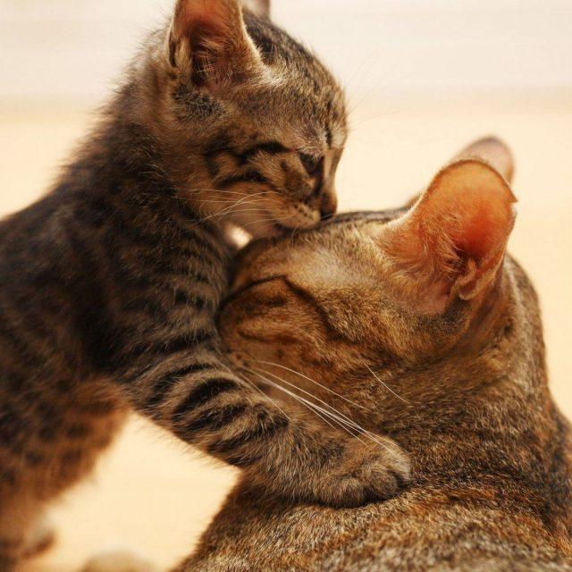 ليه قطتي بتعمل كدا ؟؟ لغة القطط مع الإنسان وتفسيرها