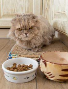قطتي لا تشرب الماء .. 5 نصائح لعلاج مشكلة شرب الماء في القطط