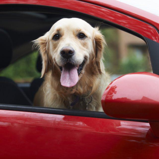 7 نصائح عند السفر مع الكلاب والقطط بالسيارة