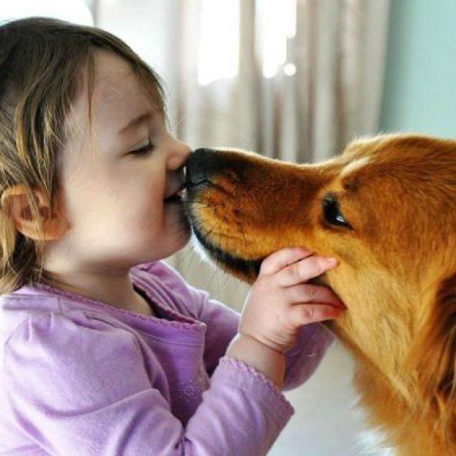 5 حقائق يجب أن تعرفها عن لعاب الكلب