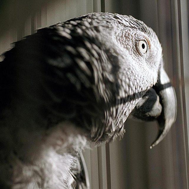 أهم امراض طيور الزينة وعلاجها في المنزل