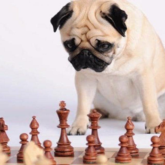 اختبار ذكاء الكلاب : سبعة علامات تدل على نسبة ذكاء الكلب