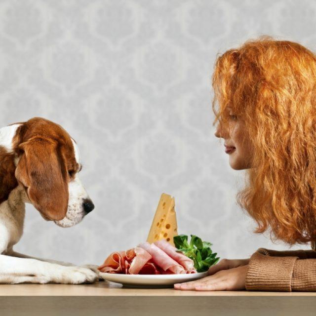 اسباب و علاج الغازات في الكلاب