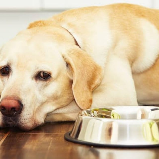 كلبي يرفض الأكل .. ماذا أفعل ؟