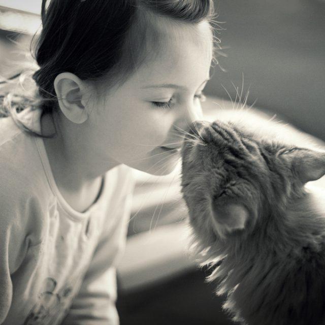 كيف أعرف أن قطتي تحبني و علامات الحب عند القطط