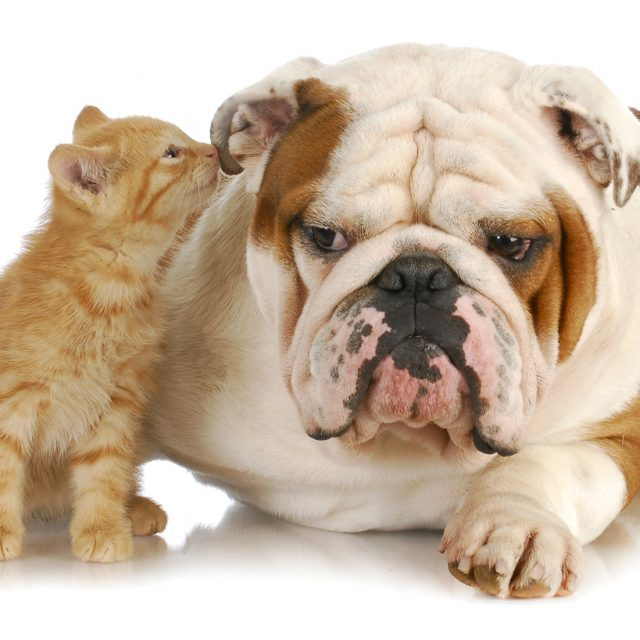 طريقة رعاية الحيوانات الأليفة كبيرة السن