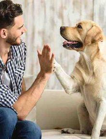 هل تشعر الكلاب بصاحبها ؟ 5 أشياء يستشعرها كلبك مبكرا !