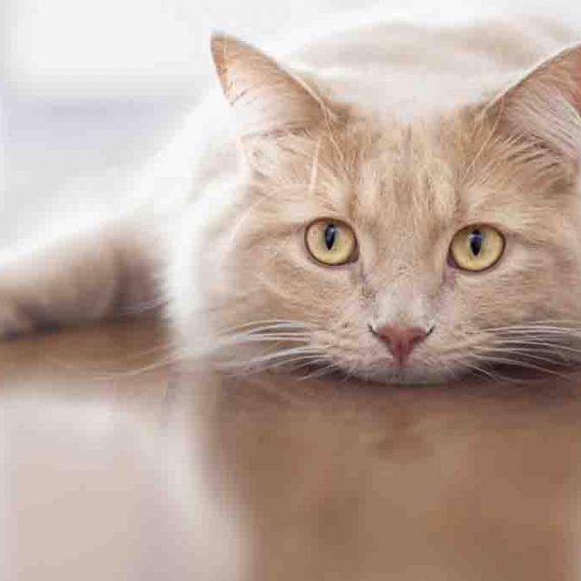 أعراض تعسر ولادة القطط وعلاجها
