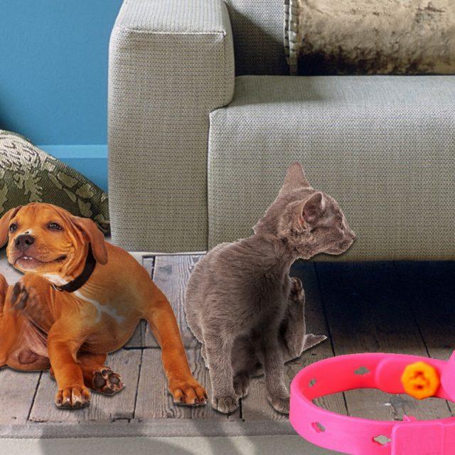 ماهي فوائد وأضرار طوق الحشرات في القطط والكلاب