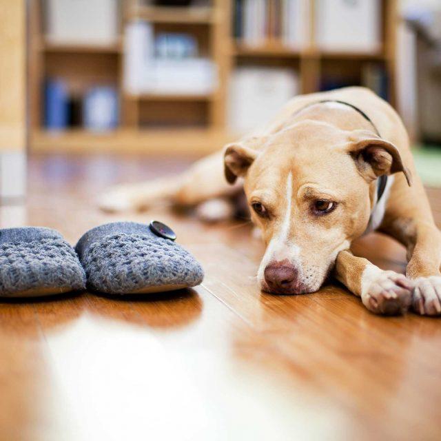 6 معلومات خاطئة عن تربية الكلاب وتدريبها