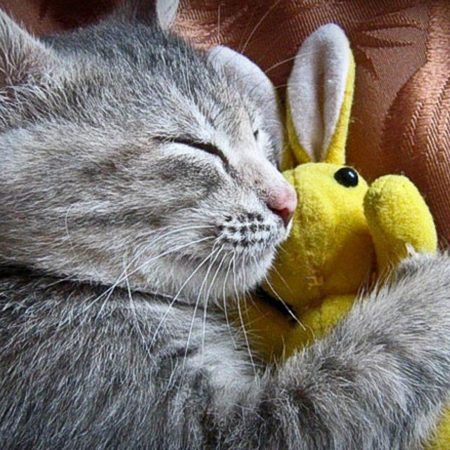 كيف أجعل قطتي تنام ليلا ؟.. اتبع هذه النصائح