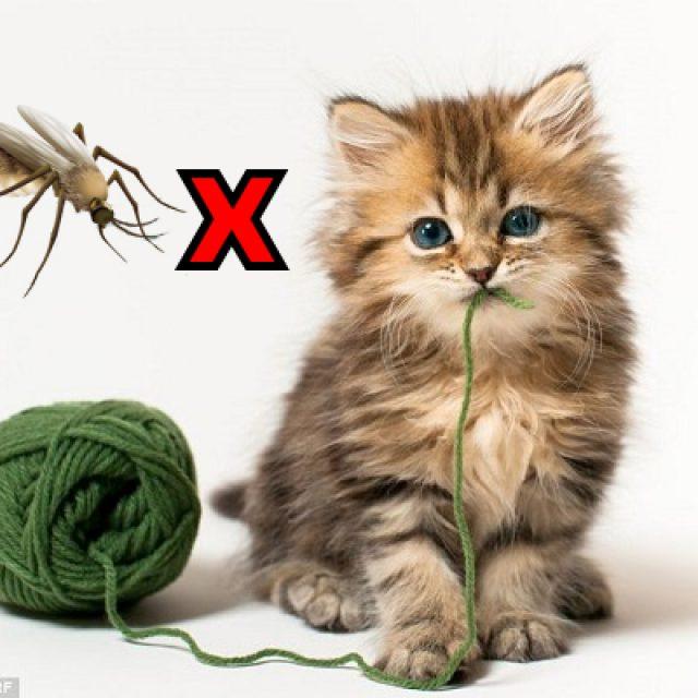 مرض الديدان القلبية في القطط وطرق الوقاية والعلاج